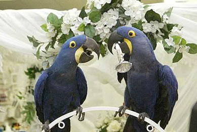 Blue and Xena's Wedding